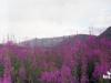 Июль 1999 г. Иван-чай. В окрестностях полевой партии в бывшей золотодобывающей артели