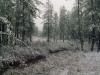 19 августа 1999 г. Уругвайский Новый год. Выпал снег.