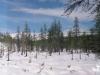 21 августа 1999 г. Снег на деревьях подтаял.
