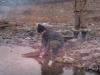 Сентябрь 1999 г. Окрестности бывшей золотодобывающей артели