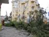 Упавшее дерево на Горького и Семашко